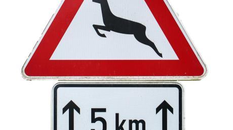 Zu einem Wildunfall ist es auf der B16 bei Münchsmünster gekommen. Doch der Fahrer kümmerte sich nicht um das tote Tier.