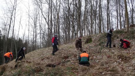 Fleißige Helfer, auf genügend Abstand achtend, pflanzen junge Bäume im Pfarrwald St. Vitus in Glött.
