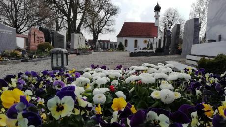 Bunte Frühlingsblumen schmücken viele der Gräber auf dem Wertinger Friedhof. Mehrere Wochen hatte der zuständige Bestatter Maik König hier keine Beerdigung zu verbuchen.