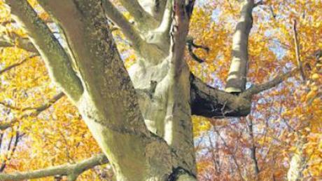 Wissenswertes erhoffen sich die Organisatoren vom Baum-Quiz.