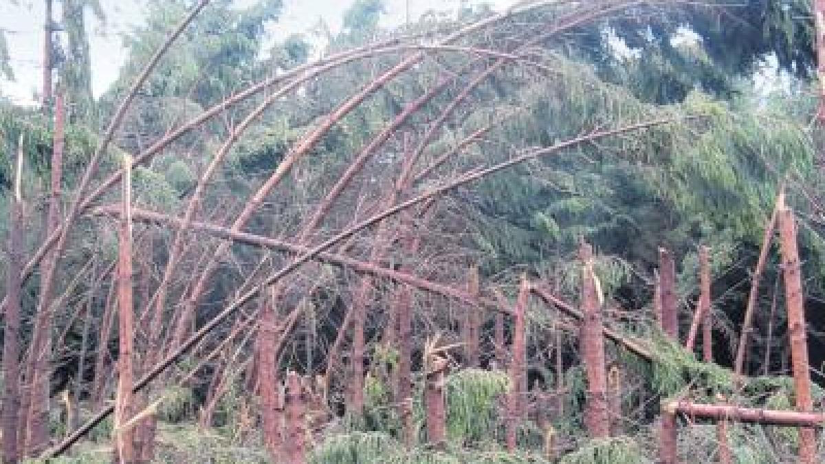 Sturm Wald