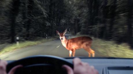Einem Mann läuft zwischen Heinrichshofen und Schmiechen ein Reh ins Auto - was macht man in einer solchen Situation?