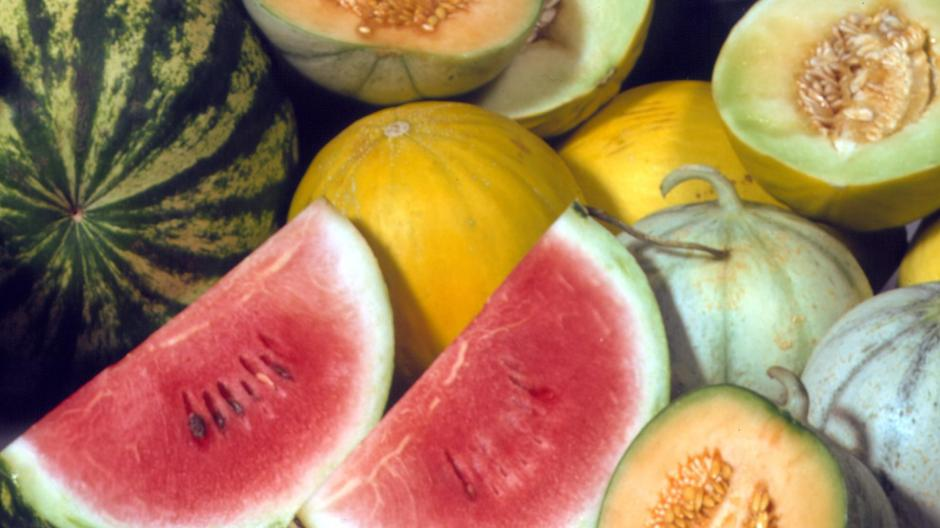 Bayerische Sommerküche : Ernährung: vegetarische sommerküche für klein und groß nachrichten