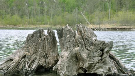 Impressionen aus den Donau-Auen, wo eventuell ein Nationalpark entsteht.