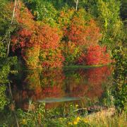 Herbstliche Farben im Wald.jpg