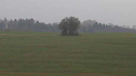 Im Bereich dieser Baumgruppe südöstlich von Rögling soll nach dem Willen des Arbeitskreises der Sendemast platziert werden.