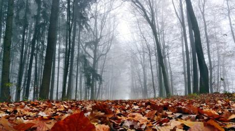 Zwei Schatzsucher haben im Wald bei Niederschönenfeld Munition aus dem Zweiten Weltkrieg gefunden.