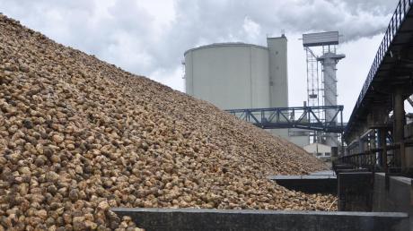 Seit September wurden im Südzucker-Werk Rain täglich 12000 Tonnen Zuckerrüben angeliefert. Jetzt geht die Kmpagne allmählich ihrem Ende entgegen.