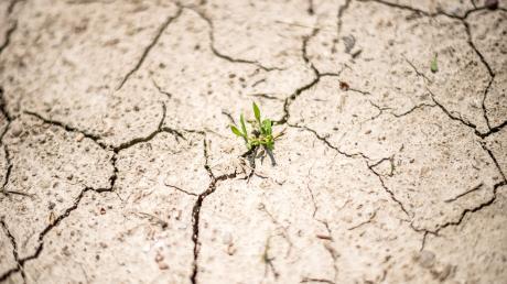 Wie macht sich der Klimawandel in Bayern bemerkbar?