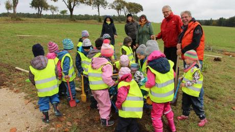 Eifrig unterstützt von den Mädchen und Buben des Kindergartens pflanzen Behördenleiter Manfred Faber und Bürgermeister Roland Wildfeuer (rechts) den ersten Baum auf der neuen Streuobstwiese bei Daiting.