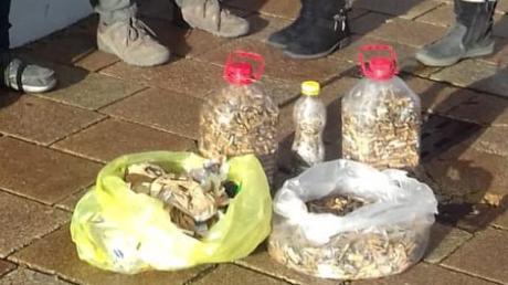 Mitglieder des Donauwörther Vereins für Nachhaltigkeit – Transition Town – haben in der Donauwörther Innenstadt 12000 Zigarettenreste aufgesammelt.
