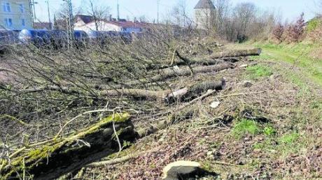 Ein wertvolles Biotop nahe des Bahnhofs in Rain ist abgeholzt und damit zerstört worden.