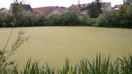 Der Wehrweiher in Tagmersheim hat sich grün verfärbt.
