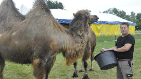 """""""Manege dicht"""": Ernst Renz versorgt die zwei Kamele des Zirkus Renz, der in Rain wegen Corona gestrandet ist."""