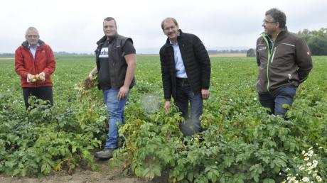 Auf dem Kartoffelfeld bei Staudheim: (von links) AELF-Leiter Manfred Faber, Landwirt Julian Schuhmann, BBV-Kreisobmann Karlheinz Götz und Helmut Stöcker (AELF).