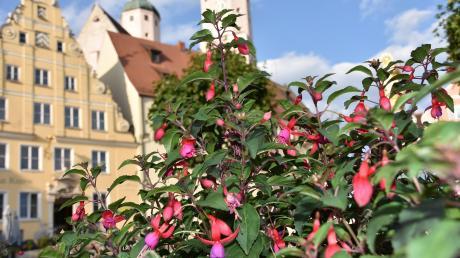 """Als """"Fuchsienstadt"""" hat sich Wemding bereits einen Namen gemacht. Nun gibt es in der Kommune Überlegungen, sich für die Ausrichtung der sogenannten kleinen Landesgartenschau zu bewerben."""