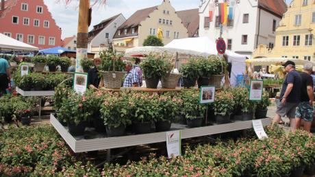 Ein großes Ereignis in Wemding: Der Fuchsien- und Kräutermarkt soll 2021 trotz Corona-Pandemie stattfinden. Das plant die Stadt. Der Markt fällt aber wohl eine Nummer kleiner aus.