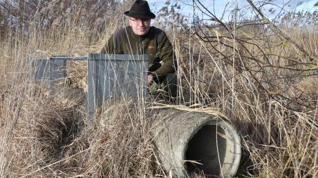 Hans-Jörg Sautter an einer sogenannten Lebendfalle. Diese hat der Jäger im Raum Tapfheim installiert, um Raubwild zu fangen. Dazu gehört in erster Linie der Fuchs. Läuft ein Tier in die Röhre, löst es einen Mechanismus aus und Schieber gehen nach unten.