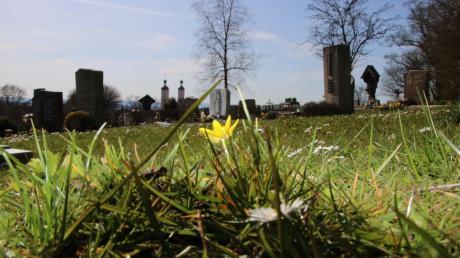 Der Friedhof – hier in Wemding – ist nicht nur ein Ort des Todes, sondern auch ein Lebensraum.