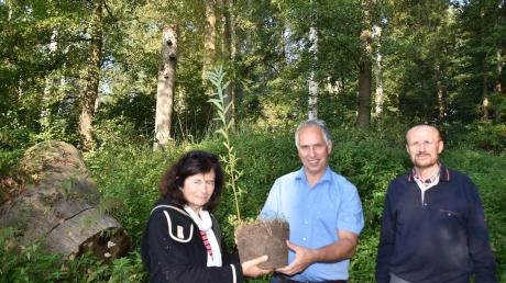 Symbolische Wald-Übergabe: das Ehepaar Annemarie Brückner und Lothar Lindstedt (rechts) hat dem Bund Naturschutz – in der Mitte Kreisvorsitzender Alexander Helber – einen naturbelassenen Auwald nahe Donauwörth geschenkt.