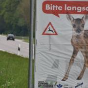 Die Zahl der Wildunfälle im Landkreis Donau-Ries bewegt sich wieder auf einem rekordverdächtigen Niveau.
