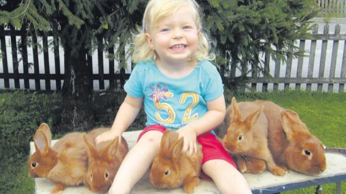 Kaninchenzüchter Bayern