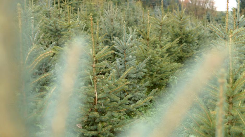 Wo Tannenbaum Kaufen.Christbaumverkauf Weihnachtsbaum In Augsburg Und Region Kaufen