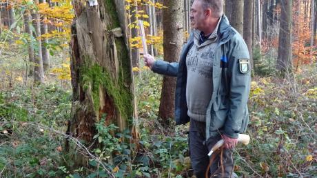 Förster Pentti Buchwald erklärte beim Tag im Wald die Bedeutung von Totholz.