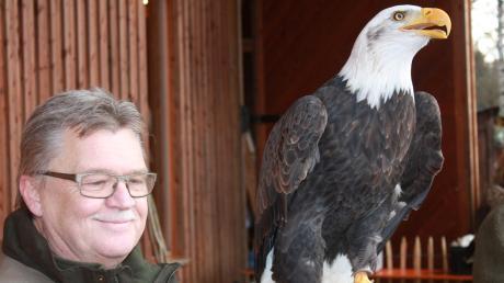 Weißkopfseeadler Bonny aus der Auffangstation Mittelfranken ist eine der Hauptattraktionen der Waldweihnacht auf Gut Mergenthau. Anton Englhard beantwortet geduldig alle Fragen zu dem imposanten Greifvogel.