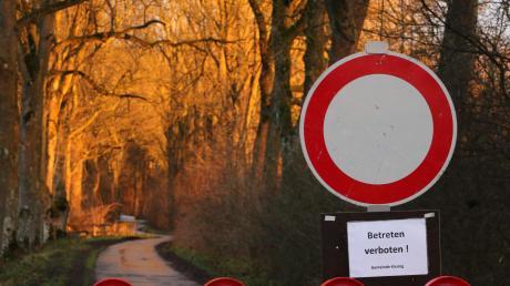 Das Eschentriebsterben hat mehr als 100 Bäume bei Mergenthau befallen. Der Weg ist aus Sicherheitsgründen derzeit gesperrt.
