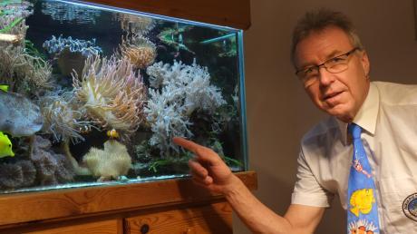 Na so was! Helmut Rigling, Vorsitzender der Aquarienfreunde Mering, zeigt, dass in seinem Aquarium dieselben Fischarten und Garnelen leben, wie man sie auf seiner Krawatte sehen kann.