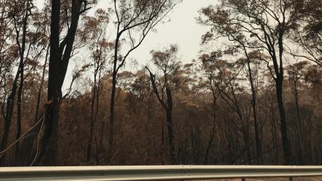 Auf ihrem Weg durch Australien sahen Gerhard Straßer und Anna Baumüller die verheerenden Schäden, die die Brände angerichtet haben.