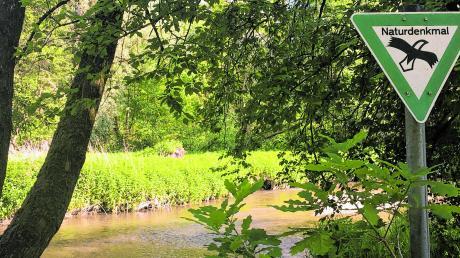 Solche Blühstreifen sorgen auch in gepflegten Hausgärten für Artenvielfalt.