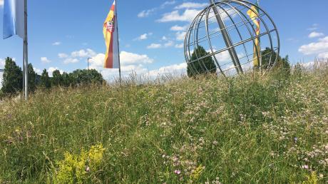 Es sprießt und wächst und grünt: Der Kreisverkehr an der B2 in Kissing gilt als Beispiel für einen mustergültigen Blühstreifen. Zahlreiche Gemeinden in Friedberg und Umgebung achten nach eigener Aussage zunehmend auf Artenvielfalt.