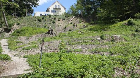 An der Lechleite bei Friedberg wurden bereits zu Beginn des Jahres Eschen gefällt. Nun muss auch die Stadt auf einem Grundstück, das ihr dort gehört, Bäume schlagen.