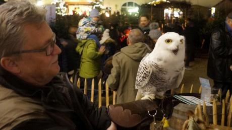 Greifvögel wie Schnee-Eule Lina waren schon öfter Attraktionen beim Weihnachtsmarkt in Mergenthau, den Tieren macht der Trubel nichts aus. Doch in diesem Jahr ist Gedränge verboten – das Aus für viele Weihnachtsmärkte.