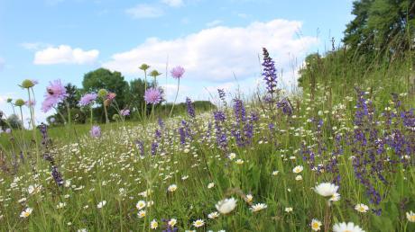 Blumenwiesen wie diese sind Ergebnis der Pflege des LPV.