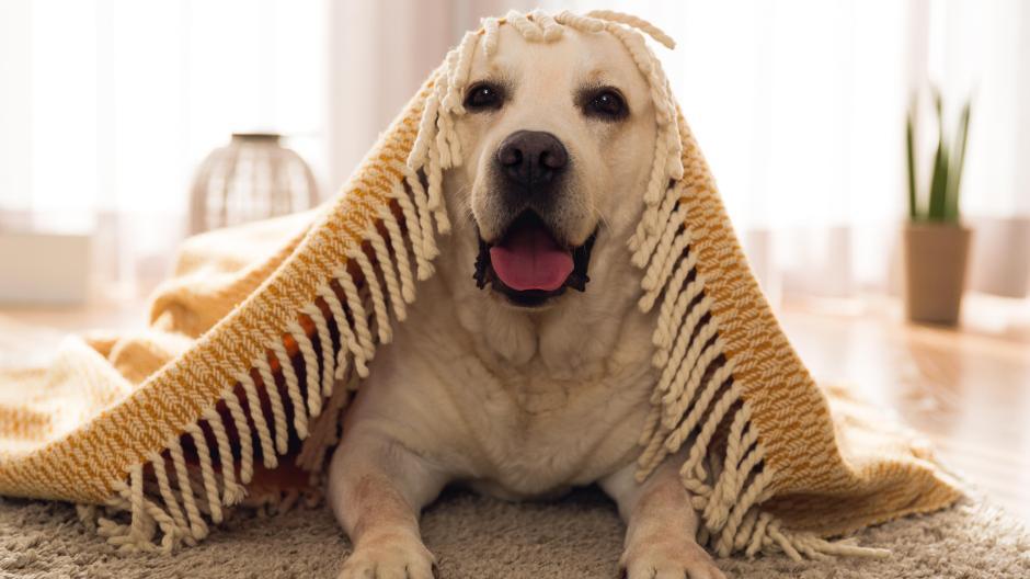 Mietrecht Tierisch Viel ärger Wann Mieter Haustiere Halten Dürfen
