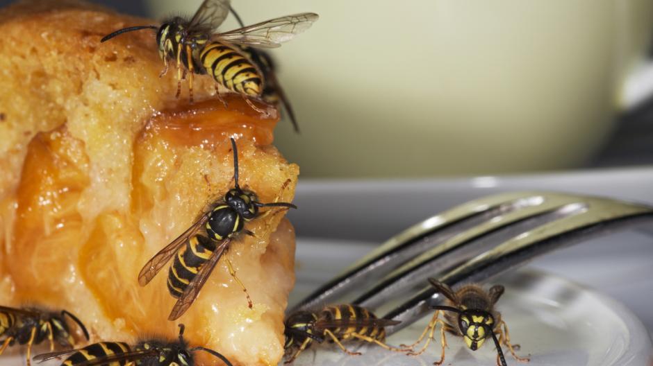 wespen nestbau verhindern