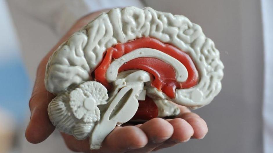 Gehirn-Nutzung: Nutzen wir nur einen kleinen Teil unseres Gehirns ...
