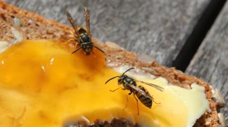 Ein Wespenstich kann für Allergiker lebensbedrohlich sein. Eine Injektion mit dem Hormon Adrenalin kann ein Ersticken verhindern. Foto: Karl-Josef Hildenbrand