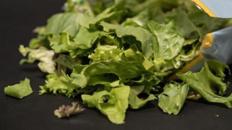 In bereits geöffneten Packungen mit Salatmischungen können sich Keime innerhalb weniger Tage stark vermehren. Foto: Robert Günther