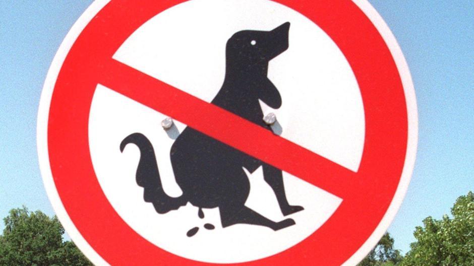 Hunde Müssen Draußen Bleiben Nachrichten Günzburg