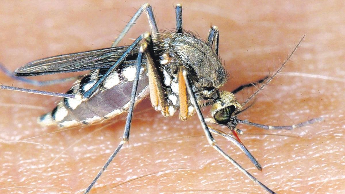 Stechmücken Licht ratgeber mückenmittel wie mücken auf abstand hält wirtschaft