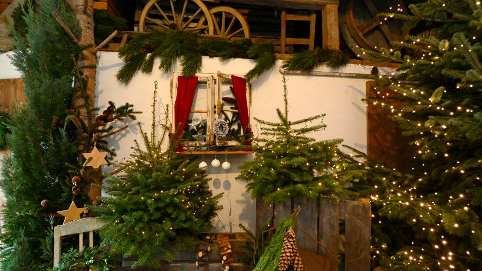 Dürrlauingen: Experte erklärt: So bleibt der Weihnachtsbaum lange ...