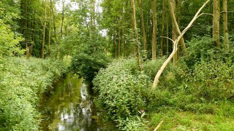 Naturschutzprojekt_Donauwald_Offingen_Juli18_33.JPG