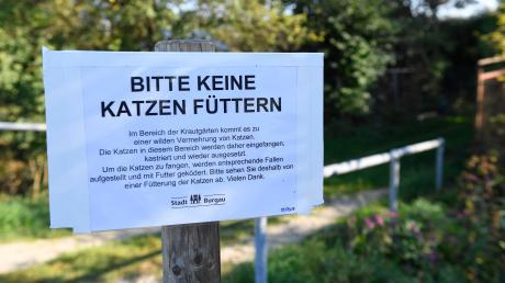 Katzenplage_Burgau_Sept18_3(2).JPG