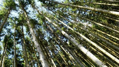 Das Frühjahr ist zu trocken – damit hat beispielsweise der Wald zu kämpfen. Er wird dann auch anfälliger, was Schädlingen wie dem Borkenkäfer gelegen kommt. Den begünstigen die Temperaturen. Zudem ist die Waldbrandgefahr so gestiegen, dass Überwachungsflüge von der Bezirksregierung angeordnet sind.