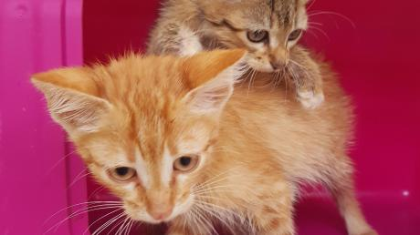 Katzenbabys hat der Zoll bei der Kontrolle gefunden.