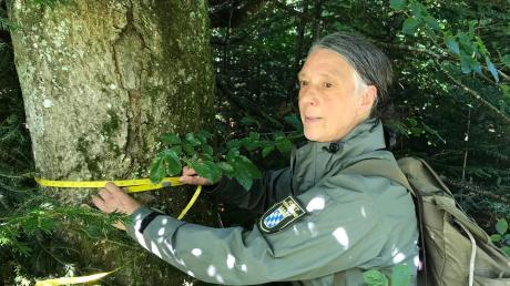 Alexandra Wauer muss sich nicht selten durchs Dickicht kämpfen, um an die Bäume zu gelangen, die seit Jahren für eine Begutachtung dienen. Nur mit einer entsprechend langen Zeitreihe kann auch eine Entwicklung dokumentiert werden.